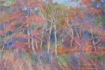 Maryland Woodlands