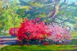 Azaleas and Pine