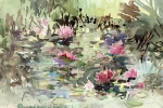 AAC - Frog Pond-Water Lilies