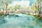 AAE - Lotus Pond-Egrets