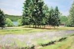 11 Lavender Farm